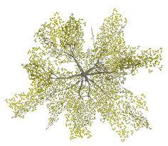 plan_tree3.png (669×582)