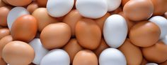 The difference is all about the chicken. White and brown eggs have no nutritional difference; however, they do have a noticeable price variance on store shelves. Nutritional Value Of Eggs, Baking Secrets, Brown Eggs, Eating Eggs, Red Feather, Food Facts, Egg Shells, Red And White, This Or That Questions