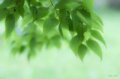 Green curtains by Alenka Krek - Photo 172958849 / 500px