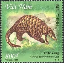 Viet Nam, 2003. The Chinese Pangolin (Manis Pentadactyla) is a pangolin found in northern India, Nepal, Bhutan, possibly Bangladesh, across Myanmar to northern Indochina, through most of Taiwan and southern China, including the islands of Hainan.