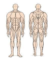 인체 근육에 대한 이미지 검색결과