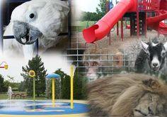 Summer Work, Summer Fun, Stuff To Do, Things To Do, Splash Zone, Unusual Homes, Zoos, Travel Stuff, Animal Kingdom