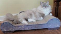 Trigg on Brawny Cat Sleeky Lounge XL Floppycats/Blue lynx mitted ragdoll