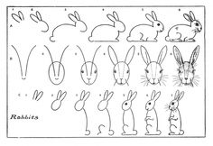 How to draw a bunny.  So cute!  This is a print from a book from the 1900s.