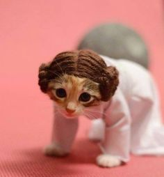 Princess Leia cat