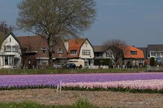 20130424-DSC_7402 (Large) by nikontino, via Flickr