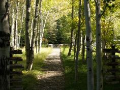 easy and beautiful landscaping - path through trees and grass to a bench