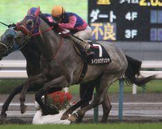 京都9R 北野特別(芝2000) メイショウテンシャと酒井J