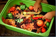 """The Fall Bin""  The base items in the bin:   black beans, red beans   fall leaves {Dollar Tree}   crystal looking acorns and mini pumpkins {Dollar Tree}   pumpkin shaped cookie cutters {from this set}   fall colored spoons and scoops   mini orange and green gourds {Dollar Tree}"