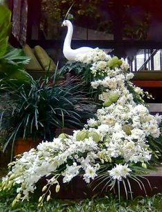 White Peacock done in flowers.