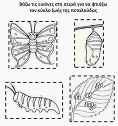Hungry Caterpillar Activities, Very Hungry Caterpillar, Spring Activities, Science Activities, Spring School, Learning Time, Weird Science, Life Cycles, Spring Crafts