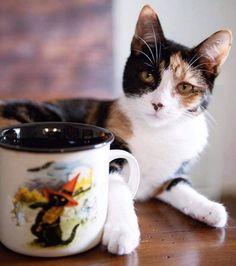 Mugs, Halloween, Tableware, Morning Breakfast, Cats, Dinnerware, Tumblers, Tablewares, Mug
