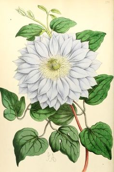 7, 1868 - The Floral magazine; - Biodiversity Heritage Library