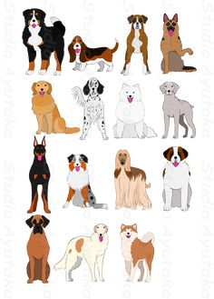 group of large and middle dogs breeds hand – Studio Ayutaka Animal Line Drawings, Cartoon Drawings Of Animals, Big Dogs, Large Dogs, Cute Dogs, Tier Wallpaper, Animal Wallpaper, Dog Chart, Cute Dog Drawing