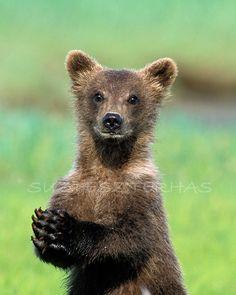 SCHATTIGE BABY BEAR Photo Print Baby dieren foto Wildlife