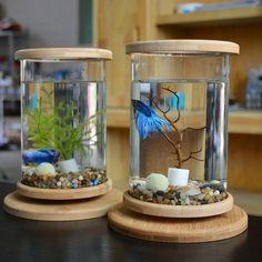 Best home Aquarium Glass Betta Fish Tank Bamboo Base Mini Fish Tank Decorat Latest Fish Tank - Fish Tank for sales Betta Aquarium, Mini Aquarium, Home Aquarium, Freshwater Aquarium Fish, Aquarium Ideas, Fish Aquarium Decorations, Goldfish Aquarium, Aquarium Aquascape, Glass Aquarium