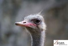 Strauss im Zoo von Bangkok Bangkok, Thailand, Animals, Tour Operator, Travel, Animales, Animaux, Animal, Animais