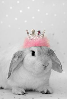 princess bunny. I think Clover deserves her own little bunny tiara.