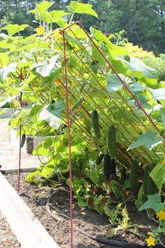 24 Easy DIY Garden Trellis Ideas & Plant Structures - A Piece of Rainbow - 24 best DIY garden trellis ideas & designs: build easy cucumber trellis, bean teepee, beautiful vine - Raised Vegetable Gardens, Vegetable Garden Design, Raised Garden Beds, Vegetable Gardening, Raised Beds, Vegetables Garden, Veg Garden, Growing Vegetables, Vegetable Bed