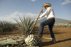 Why You Should Visit Mexico's Tequila Trail - Tequila fanatics can take their obsession to the source by visiting Mexico's Tequila Trail, a region located outside of Guadalajara in Jalisco.