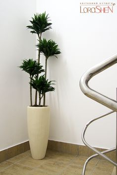 Houseplants That Filter the Air We Breathe inside plant Mais Large Indoor Plants, Leafy Plants, Indoor Trees, Green Plants, Interior Design Plants, Plant Design, Inside Plants, Inside Design, Design Your Home