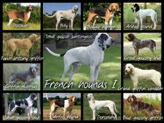 French scenthounds