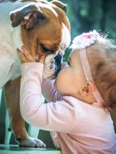 The major breeds of bulldogs are English bulldog, American bulldog, and French bulldog. The bulldog has a broad shoulder which matches with the head. Dogs And Kids, Animals For Kids, Cute Baby Animals, Animals And Pets, Funny Animals, Babies With Dogs, Bulldog Puppies, Cute Puppies, Tier Fotos
