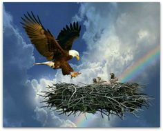 When eagles come to mind, people commonly imagine some enormous hunter soaring above wide-open spaces on outsized wings. Indeed, eagles are amo. The Eagles, Bald Eagles, Eagle Images, Eagle Pictures, Our National Bird, Eagle Nest, Eagle Wings, Prophetic Art, Lion Of Judah
