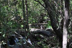 Verano 2015. Garganta Gualtaminos, río abajo de El Librito. Ven a Veragua y descubre La Vera - www.veraguaocio.com Turismo Extremadura - Alojamiento Rural Cáceres . Extremadura. España. Imagen vía archivo Veragua.