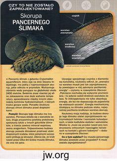 Skorupa pancernego ślimaka