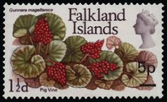 Falkland Islands 1971 SG264b Mint 1971 5p on 1½d 'Pig Vine', ERROR OF SURCHARGE ON THE WRONG VALUE, with surcharge AT RIGHT, unmounted o.g. Only one sheet (= 60 stamps) existed.