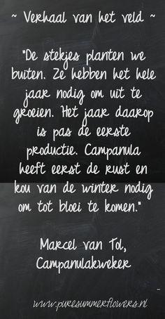 Kort verhaal over zomerbloemen. Quote Campanulakweker.     This quote courtesy of @Pinstamatic (http://pinstamatic.com)