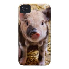 Cute Baby Piglet Farm Animals Barnyard Babies Case-Mate iPhone 4 Case