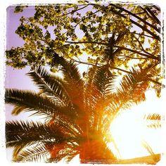 #palmera#godella#enHeladeria Fotografia de Victor Martinez Marti