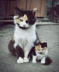 "25 Animals That Have The Cutest Little ""Mini-Me"""