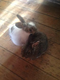Furry Friends Animal Rescue in Surrey who these 2 cuties were rescued by from a box #FridayFund #rabbit #fundraising #giving