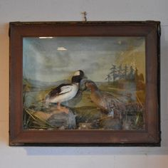 Old Victorian Framed Taxidermy Ducks Birds Hunting Lake Painting Display Diorama