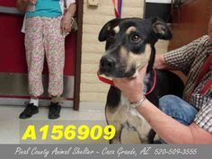 ***CODE RED - NEEDS A COMMITMENT HOLD BY 5:30 AM PDT SATURDAY, JULY 11, 2015*** DUPLICATE PICTURE OF LESTER, A LOVELY NEUTERED GERMAN SHEPHERD MIX, who needs a foster/adopter/rescue ASAP!!! Can you give this lovely boy a home?