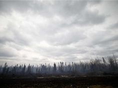 Smoke rises from a burned out area on Highway 63 south of Fort McMurray, Alberta, Canada, May 9, 2016 after wildfires forced the evacuation of the entire town.  Authorities battling a forest fire in Canada looked to Mother Nature for more help May 9, as cooling temperatures and rain slowed the spread of the blaze that had forced the evacuation of an entire city.