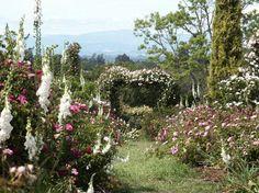 Vintage Gardens :. About Vintage