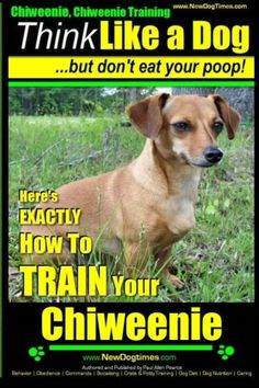 Chiweenie, Chiweenie Training AAA AKC | Think Likwe a Dog - But Don't Eat Your Poop: Chiweenie Breed Expert Dog Training. Here's EXACTLY How To TRAIN ... Training, Chiweenie Books) (Volume 1)