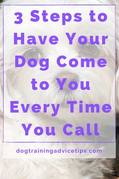 3 Steps to Have Your Dog Come to You Every Time You Call. #dogtrainingadvicetips #dogbehavior #dogtraining #dogobedience #dogtrainingtips #dogtips #dogrecall #dogs #dogtrainingbasic Agility Training For Dogs, Basic Dog Training, Puppy Training Tips, Dog Agility, Puppy Care, Pet Care, Dog Care Tips, Pet Tips, Positive Dog Training