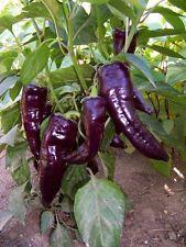 Sweet Italian Marconi Purple Peppers