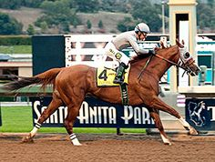 An urbanized heartfelt story about a champion racehorse named California Chrome through the eyes of a pedigree expert from California Horse Racing, Race Horses, Santa Anita Park, Preakness Stakes, Dubai World, Derby Winners, Sport Of Kings, Thoroughbred Horse