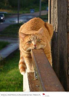 Pin 'kotem byc..' - Pinka - zbierz, zapisz, podziel się