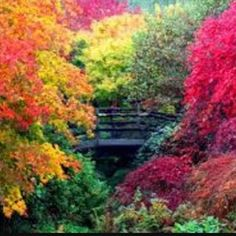 Who else is eagerly awaiting that 1st hint of colour#autumn#fall#seasons#colour