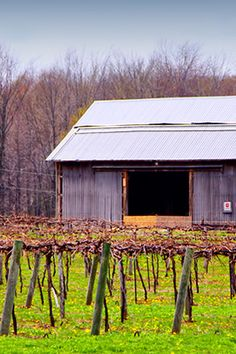Harbor Country,  Michigan wineries & wine tasting