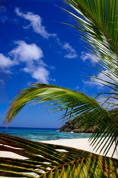 Amazing Guadeloupe - http://www.travelandtransitions.com/destinations/destination-advice/latin-america-the-caribbean/
