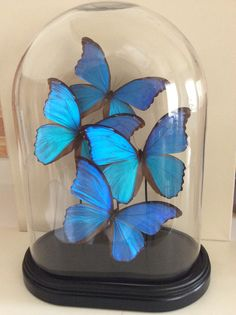 REAL BLUE MORPHO CATENARIA BUTTERFLY CHRISTMAS ORNAMENT CLEAR BALL GIFT