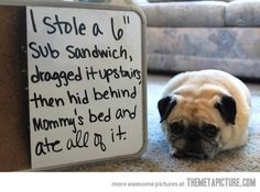 "Dog Shaming: I stole a 6"" sub sandwich, dragged it upstairs, then hid behing mommy's bed and ate all of it."